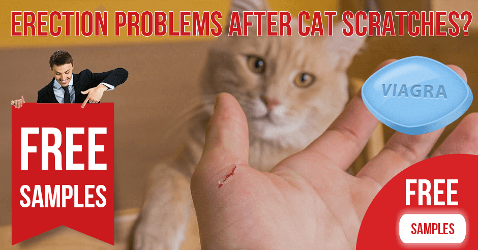 Can erection problems appear after cat scratches | BuyEDTabs