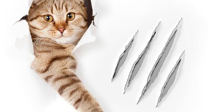 Cat scratches